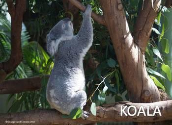 Australian Wildlife - 2 Book Bundle