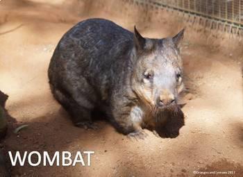 Australian Wildlife - Koala, Brumby, Wombat, Frilled Neck Lizard and Kookaburra