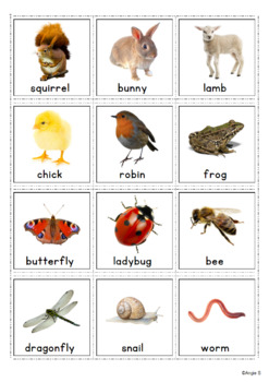 Autism Communication Cards - Spring