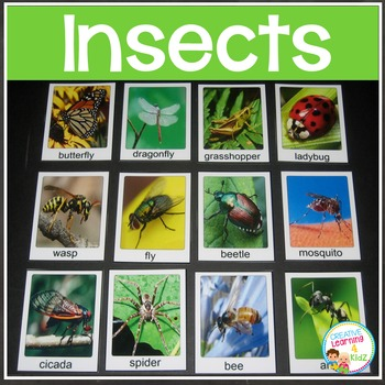 Insects Bugs