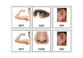 Autism Intervention - Body Parts Flash Cards - high resolution