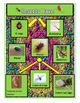 Autism: Science Insects; Differentiated Activities