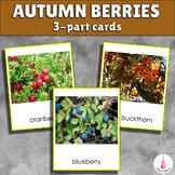 Autumn Berries Montessori 3-part cards