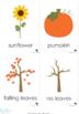 Autumn/Fall Vocabulary Cards