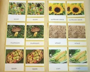 Autumn Nature Gifts Montessori 3-part cards