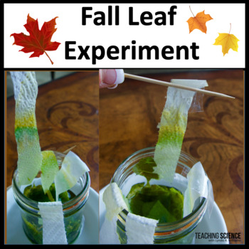Autumn Leaf Experiment With Interactive Notebook Flaps NGSS MS-LS1-6.