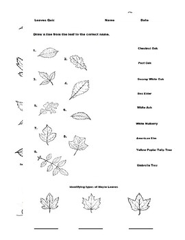 Autumn Leaves (12 Common Type in North America)