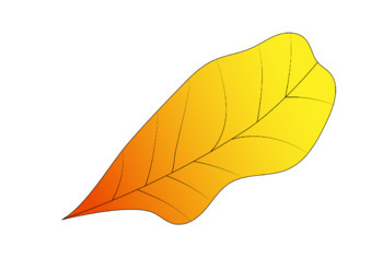 Autumn Leaves Clipart x 20 | Fall Leaves Clipart | Color and Blackline