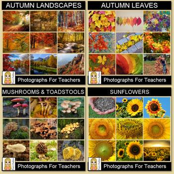 Autumn Photograph Bundle