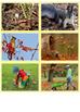 Autumn Vocabulary Cards