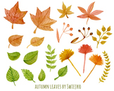 Autumn foliage - a set of autumn leaves