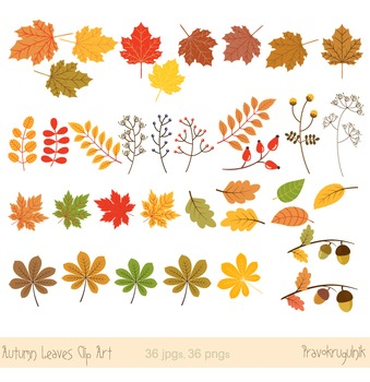 Autumn leaves clipart, Fall leaves clipart, Autumn leaf clip art