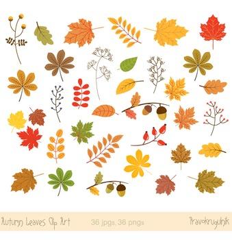 Autumn leaves clipart, Fall leaves clipart, Autumn leaf clip art