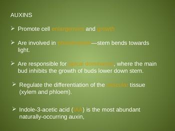 Auxins - Responses to Stimuli