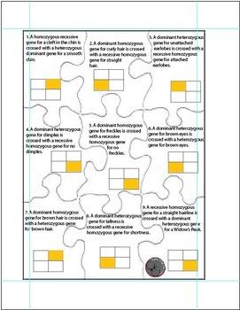 Average to High Genetics Puzzles (Punnett Squares)