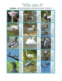 Avian Identification:Using riddle boxes to identify typical wetland birds in FL.