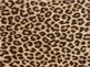 Awesome Animal Print Classroom Signs Decor Tags Borders 8.5 x 11 All Grades