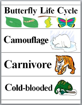 Animals Illustrated Science Word Wall