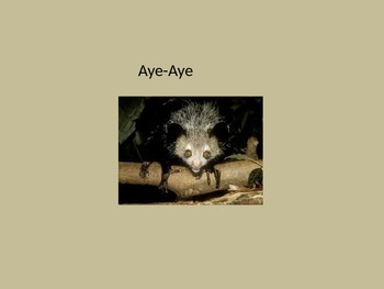 Aye Aye - Power Point - Information Pictures