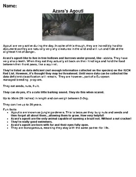 Azara's Agouti Zoo Animal Article, Summary and Drawing Assignment