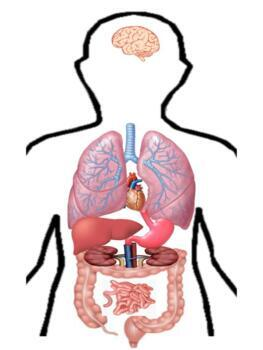 B010: organ placement and info