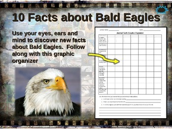 BALD EAGLES: 10 facts. Fun, engaging PPT (w links & free graphic organizer)
