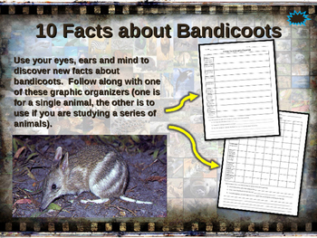 BANDICOOTS - visually engaging PPT w facts, video links, h