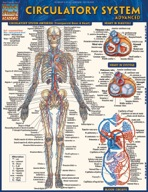 Circulatory System Advanced
