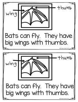 bats fun facts and life cycle for kindergarten and first grade by star kids. Black Bedroom Furniture Sets. Home Design Ideas