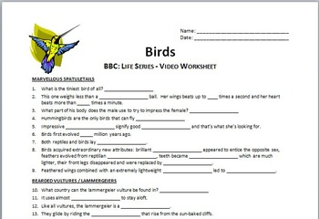 BBC Life - BIRDS - Video Questions Worksheet {Editable}
