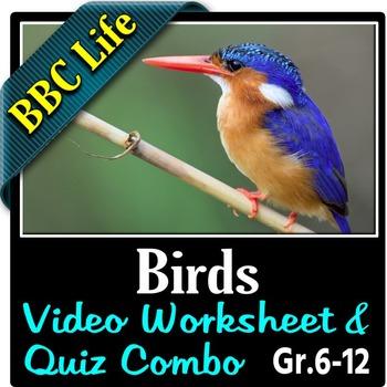 BBC Life - BIRDS - Video Worksheet & Quiz Combo {Editable}