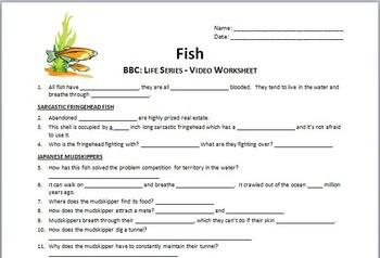 BBC Life - FISH - Video Questions Worksheet {Editable}