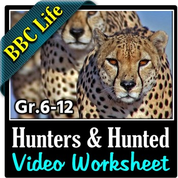 BBC Life - HUNTERS AND HUNTED - Video Questions Worksheet {Editable}
