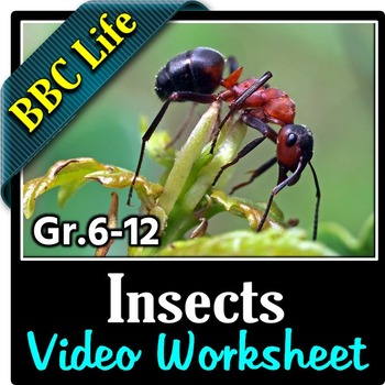 BBC Life - INSECTS - Video Questions Worksheet {Editable}