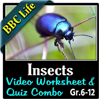 BBC Life - INSECTS - Video Worksheet & Video Quiz Combo {Editable}