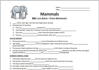 BBC Life - MAMMALS - Video Questions Worksheet {Editable}