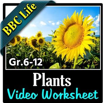 BBC Life - PLANTS - Video Questions Worksheet {Editable}