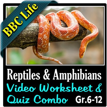 bbc life reptiles and amphibians video worksheet quiz combo editable. Black Bedroom Furniture Sets. Home Design Ideas