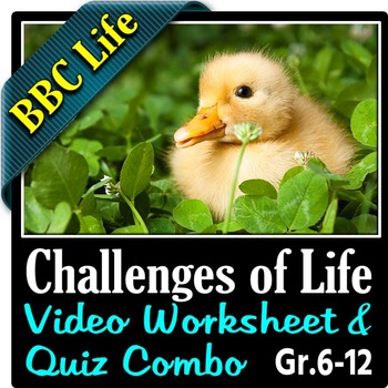 BBC Life - THE CHALLENGES OF LIFE - Video Worksheet & Quiz Combo {Editable}