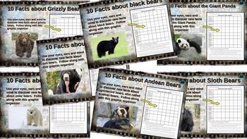 """BEARS"" BUNDLE 7 PPTs - BROWN (GRIZZLY), BLACK, SUN, SLOTH, POLAR, PANDA, ANDEAN"
