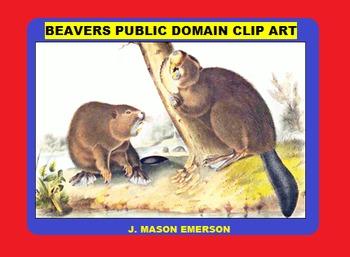 ART, SCIENCE: BEAVERS PUBLIC DOMAIN CLIP ART (60 images)