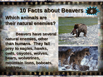 BEAVERS - visually engaging PPT w facts, video links, handouts & more
