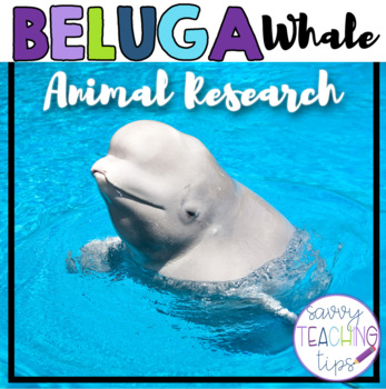 BELUGA WHALES - nonfiction animal research