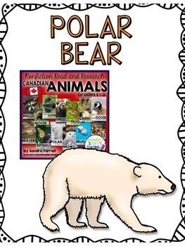 POLAR BEARS - nonfiction animal research