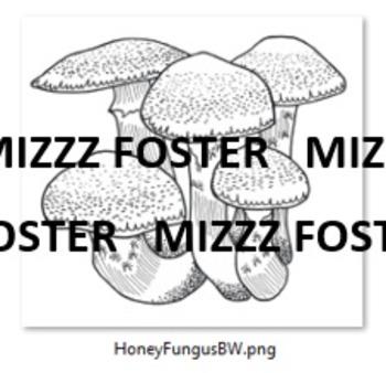BIG Fungus Mushroom Color and Black & White (20 pieces)