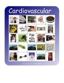 BINGO!  Cardiovascular System Terminology