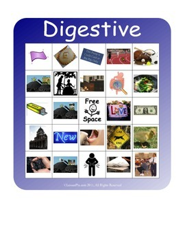 BINGO!  Digestive System Terminology
