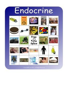 BINGO!  Endocrine System Terminology