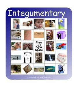 BINGO!  Integumentary System Terminology
