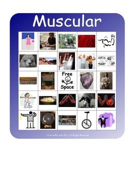 BINGO!  Muscular System Terminology